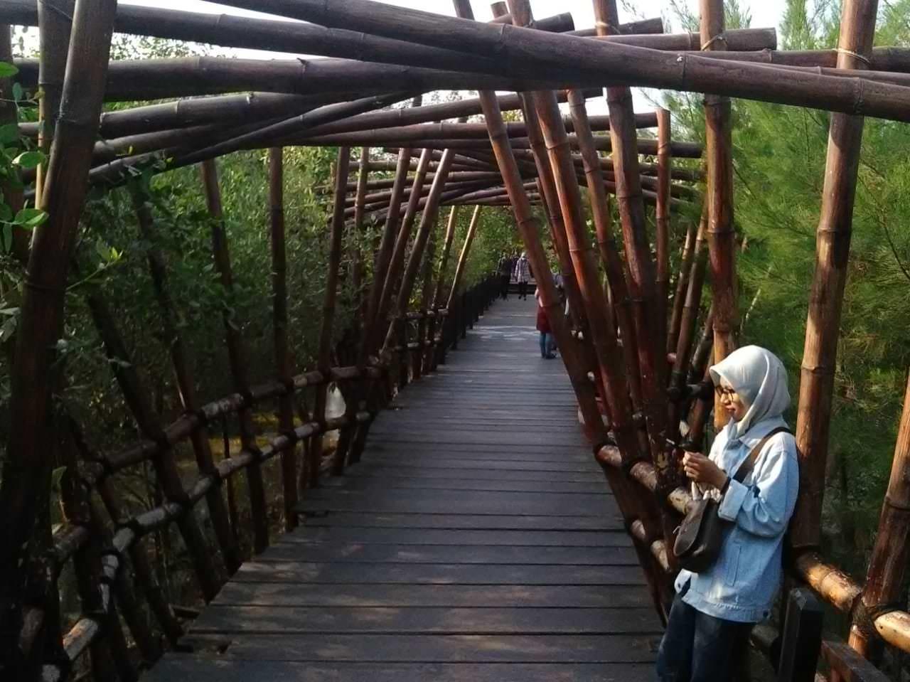 wisata mangrove