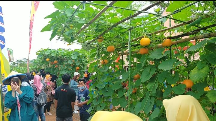 Agrowisata Kebun Melon Universitas Lampung menawarkan edukasi tentang melon, pemandangan indah dan wisata petik melon